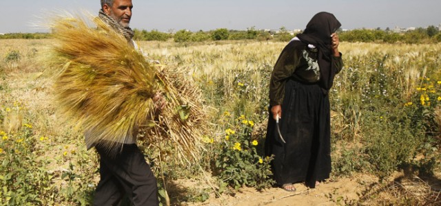 """The Israeli military operation in Gaza has devastated the enclave's food production process the UN has announced, warning that the lack of food will """"severely"""" affect the local population and..."""