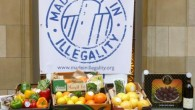 """On Thursday – February 27, some 20 Belgian organisations launched a campaign """"Made in illegality."""" The campaign advocates on the basis of international law that Belgium and the European Union […]"""